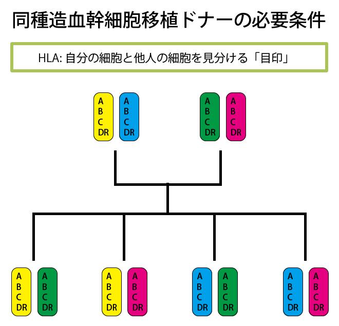 画像:同種造血幹細胞移植ドナーの必要条件